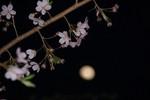 スローシンクロを使って桜をメインに