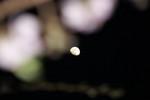 こちらは月をメインに