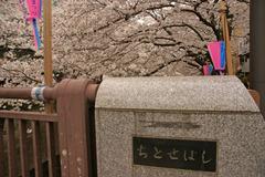 目黒川・千歳橋