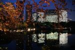 桜の向こうの汐留ビル群