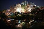 池に浮かび上がる夜桜