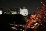 すっかり日が暮れた海手伝橋と八重桜を臨む汐留
