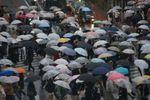 ちょっと濃い色の傘が増えたけど・・・
