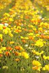 花の力強さが癒しの源でしょう