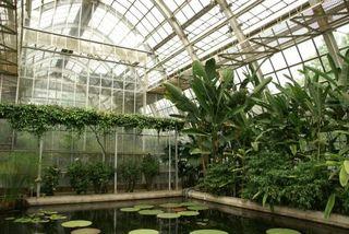 新宿御苑熱帯スイレン室