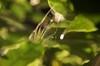 虹色クモの巣4