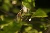 虹色クモの巣6