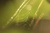 虹色クモの巣7