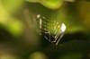 虹色クモの巣8