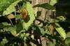 葉の表にしがみついて