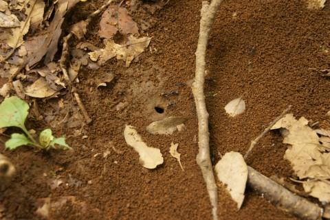アリの巣1