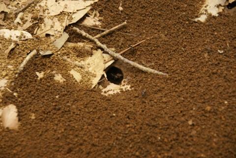 アリの巣2