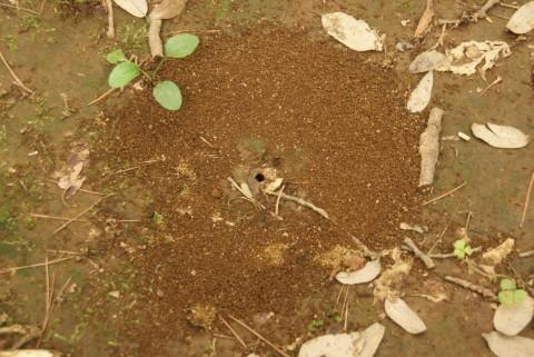 アリの巣3