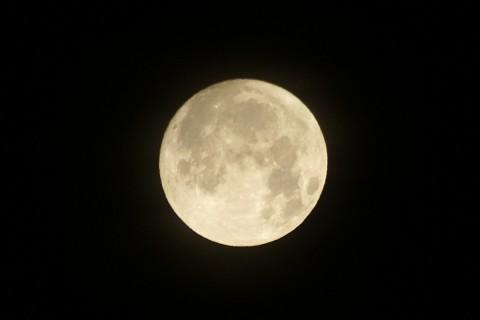 十五夜お月様
