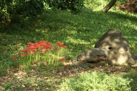 庭石と曼珠沙華