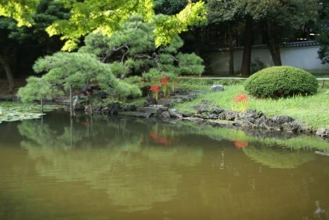 池のほとりの曼珠沙華