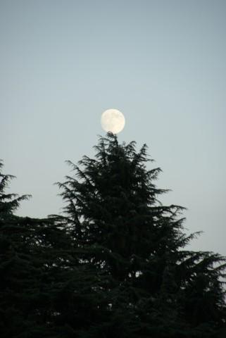 月のクリスマスツリー