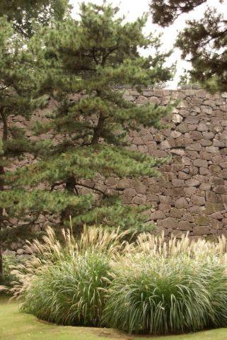 石垣とススキ