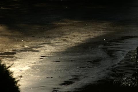 氷を照らす木洩れ日