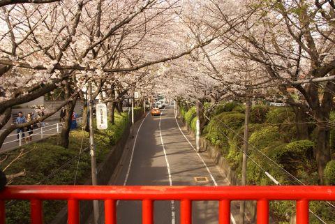 桜坂の橋の上から