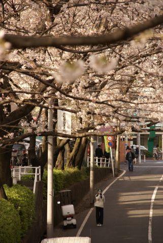 桜坂の橋を撮る人