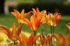 バレリーナが踊っているような花の形です