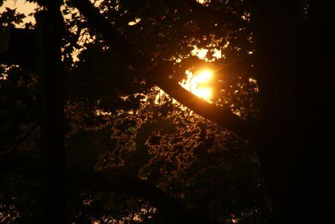 夕日の木洩れ日
