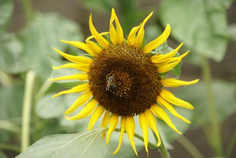 ミツバチも伝える思い