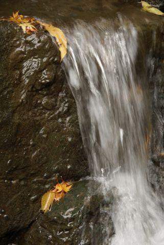 モミジの滝行