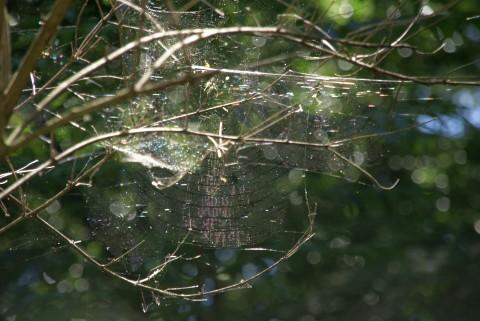 見つけた、虹色クモの巣