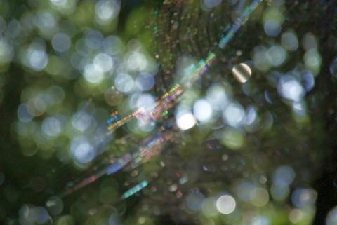 クモの巣の虹色