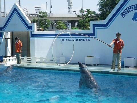 イルカ・輪くぐり