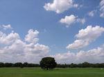 芝生に青い空白い雲 寝転びましょう!