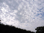 空を覆い尽くす