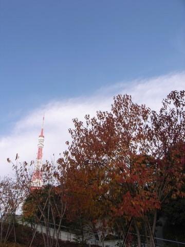 東京タワーと紅葉