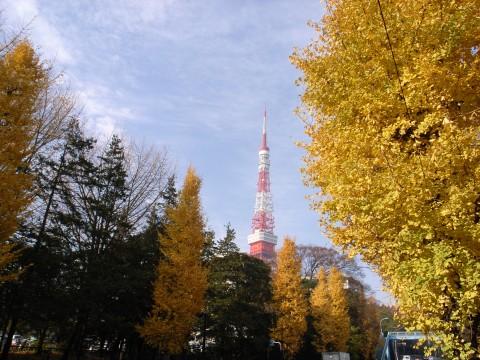 東京タワーとイチョウ並木