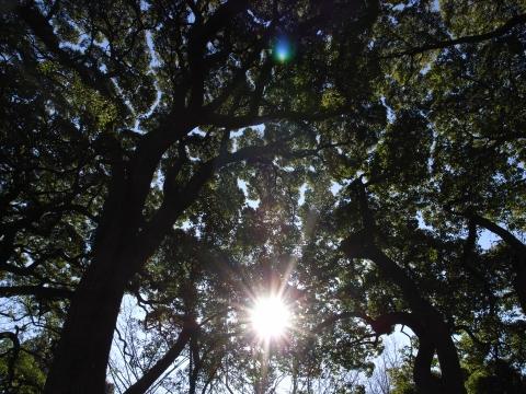 笑顔の木洩れ日