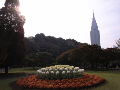 路地花壇の菊とDocomoタワー