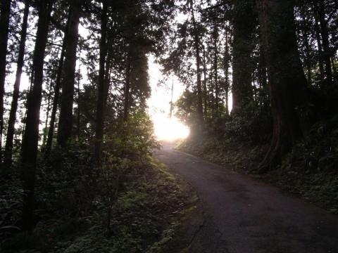 大雄山最乗寺下山路の朝日