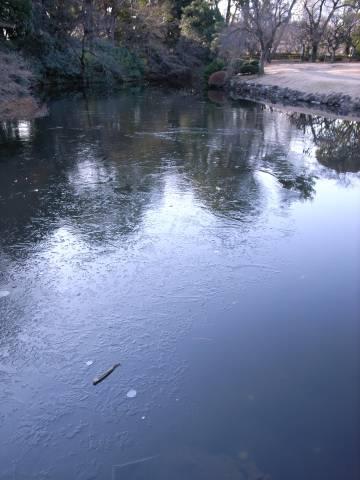 凍る玉藻池