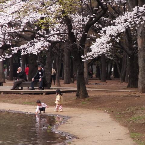 桜より遊び