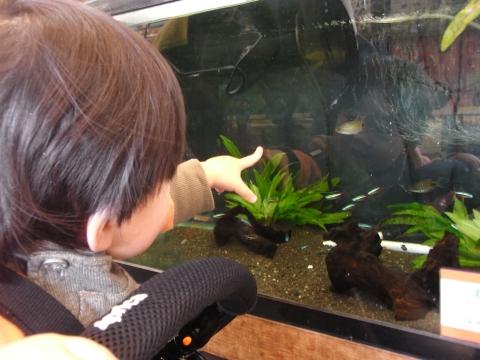 魚を見る悠真