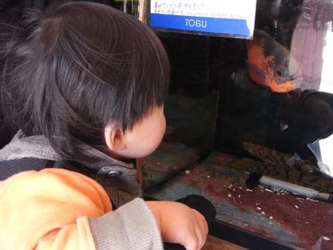 古代魚と悠真