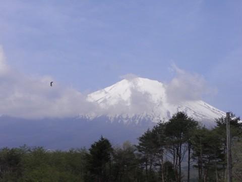 富士山と虫