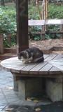 土曜日の写真ですけど、白と黒の猫が雨宿りして丸まってました。