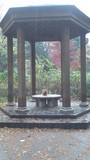 今日の舞台は林試の森の池のほとりの休憩所です。